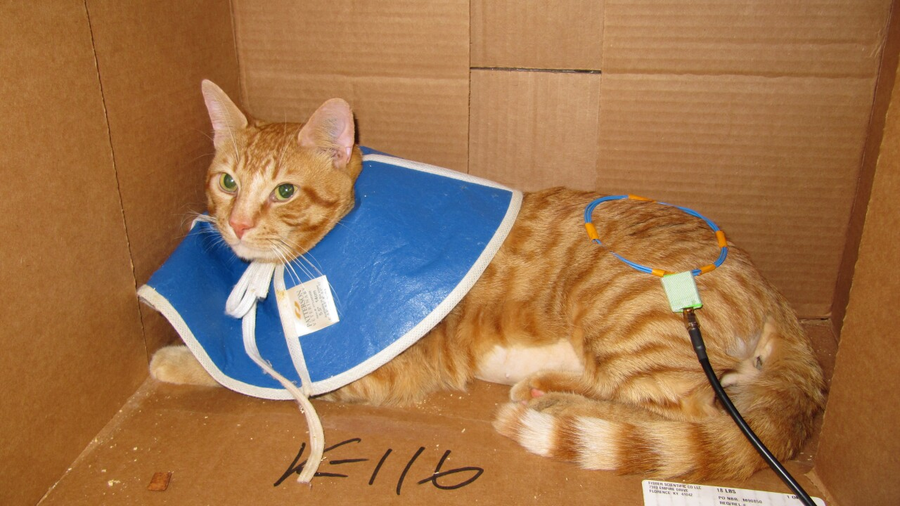 Cats used in VA medical research