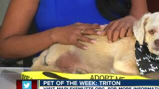 Meet our 23ABC Pet of the Week, Triton!
