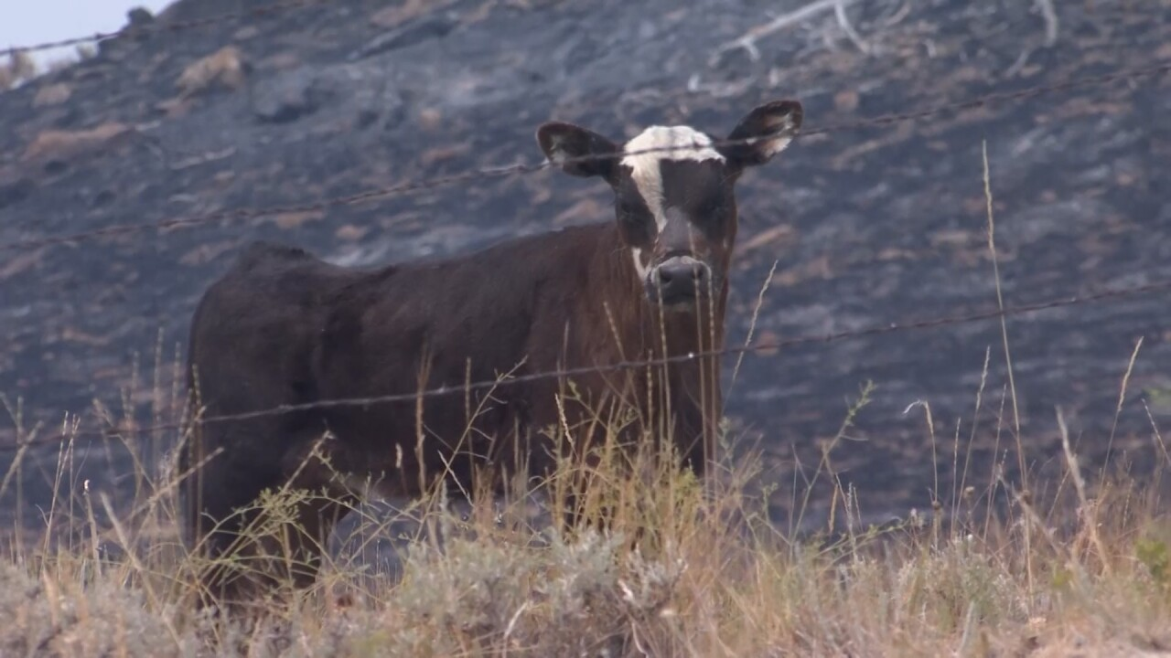 Montana Ag Network: Ranchers working to prevent catastrophic wildfires