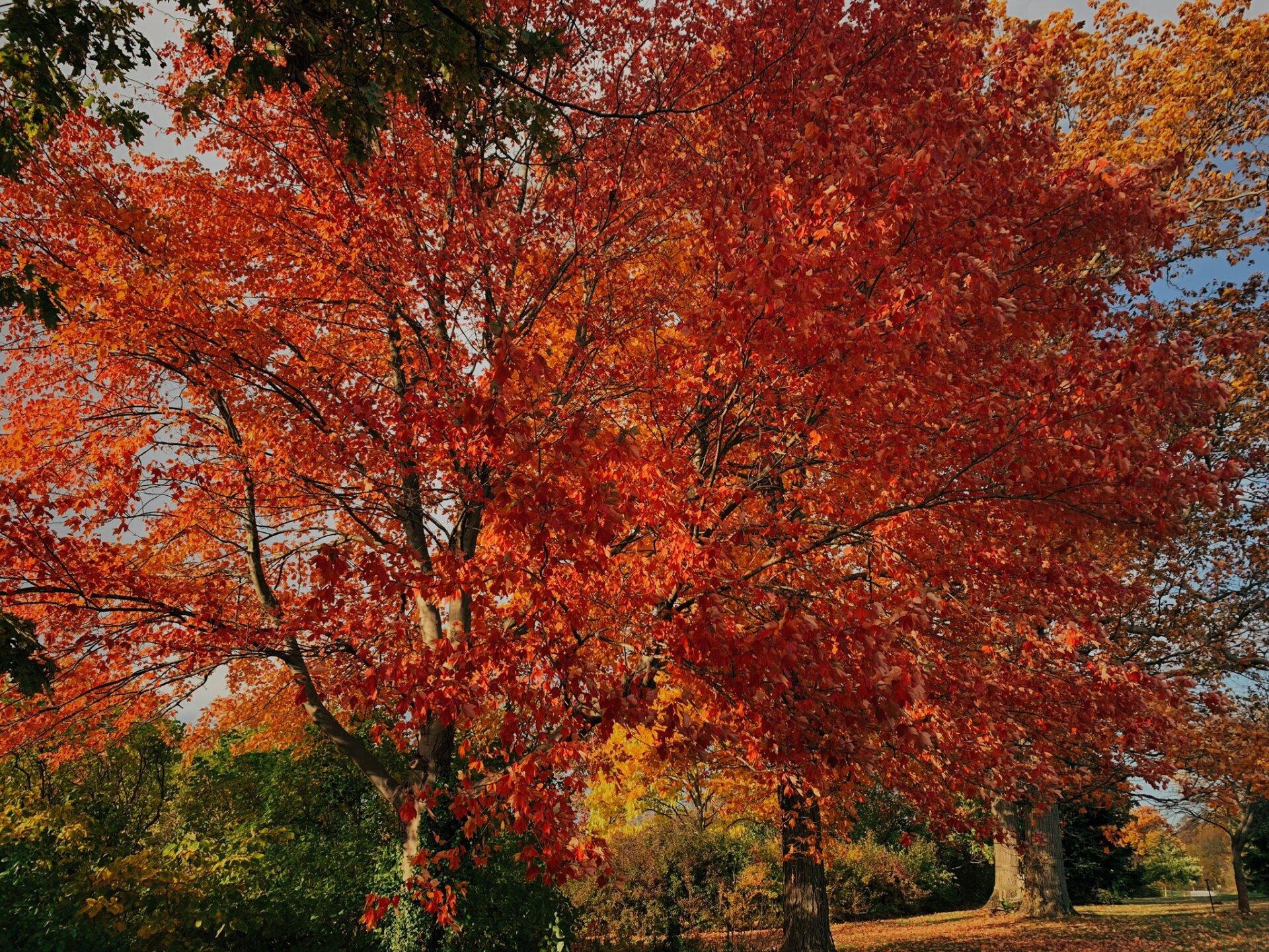 Holden Arboretum6.jpeg