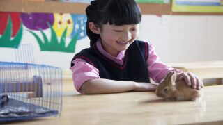 Free classroom pets for teachers available through grant program