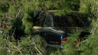 Monsoon tree damage