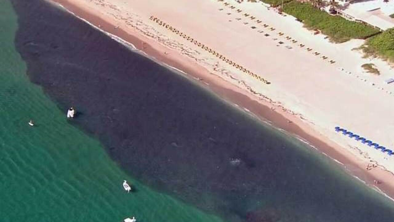 VIDEO: Thousands of fish swarm by Florida coast