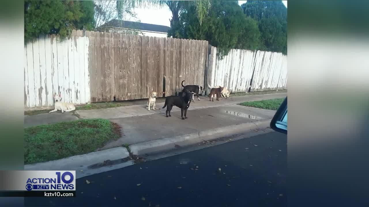Wandering dogs in Los Encinos neighborhood