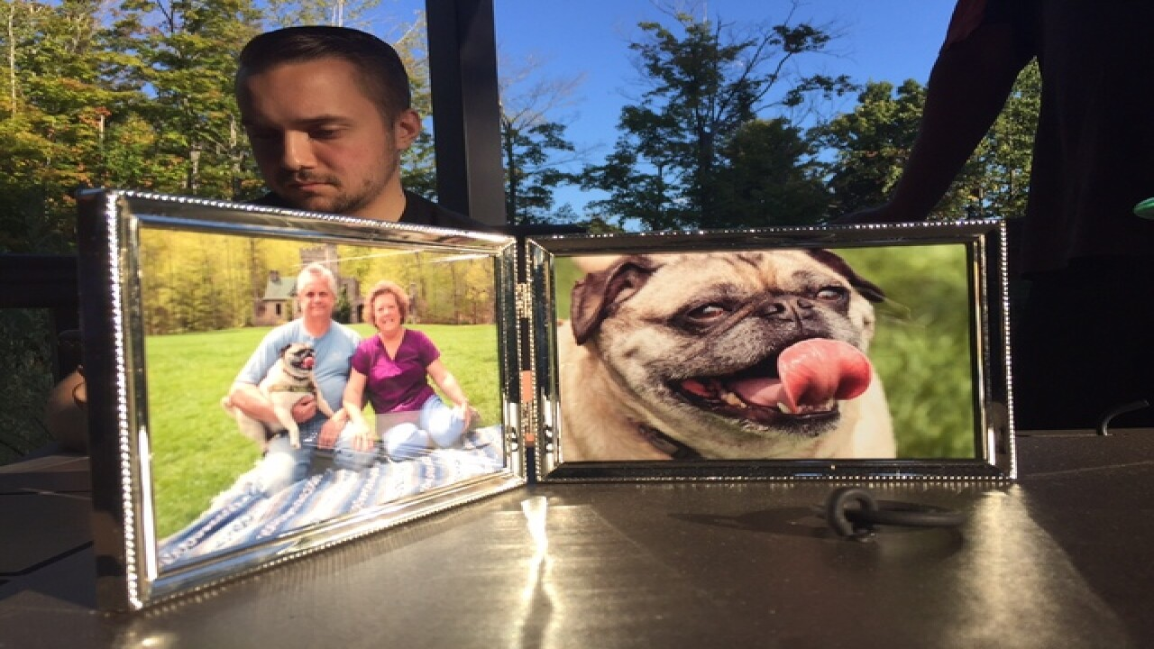 PD: 3 pit bulls maul, kill pug in Kirtland