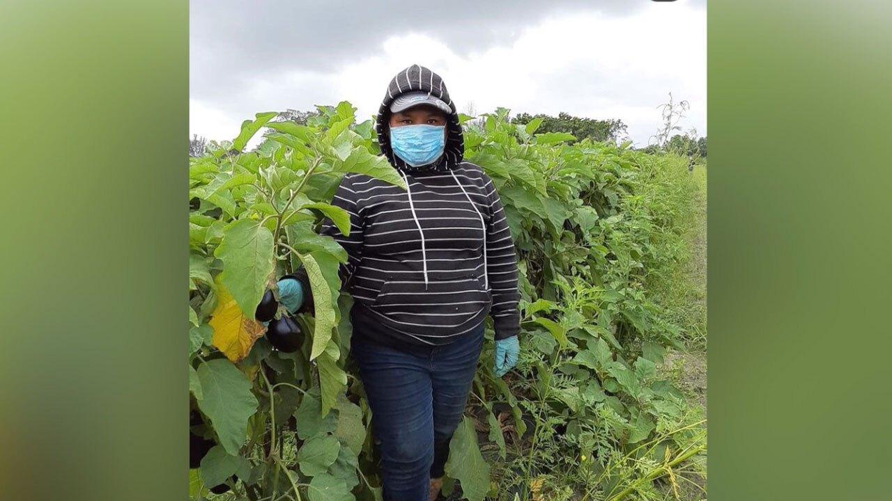 Maria Carolina, former vegetable picker turned face-covering designer