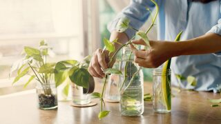 Plant cuttings: How to make money selling them