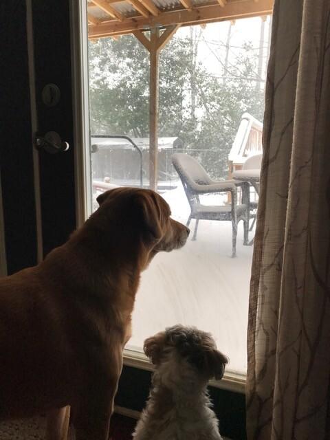 Photos: Pictures: Winter storm in Hampton Roads and NE North Carolina | Part7