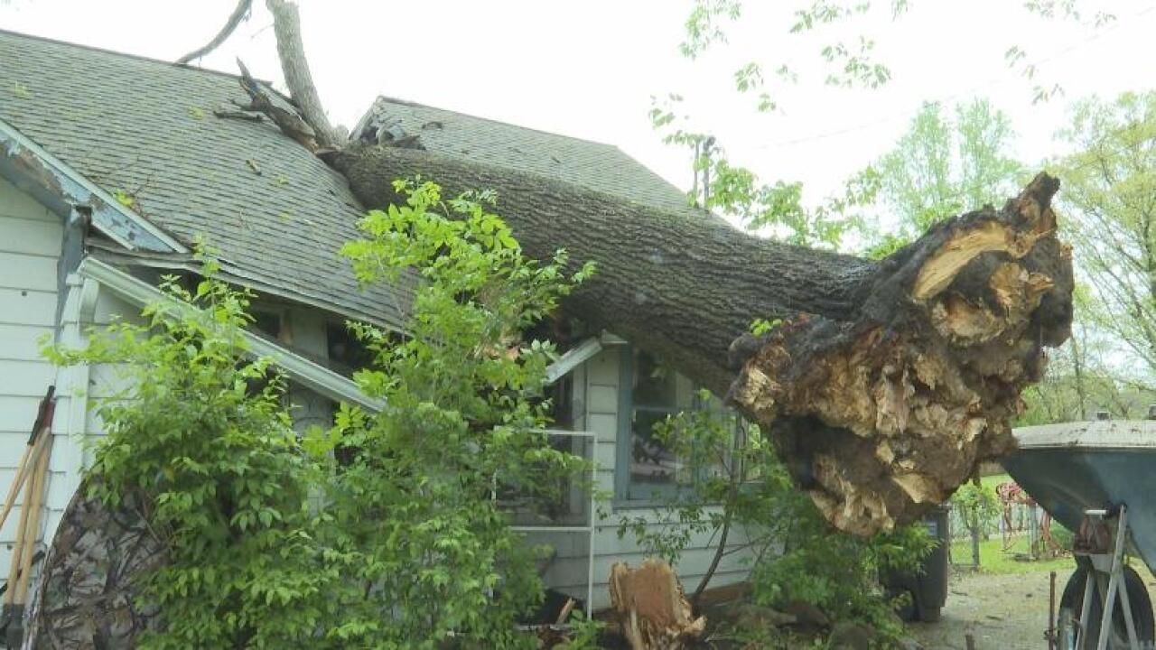 Fallen+tree.jpg