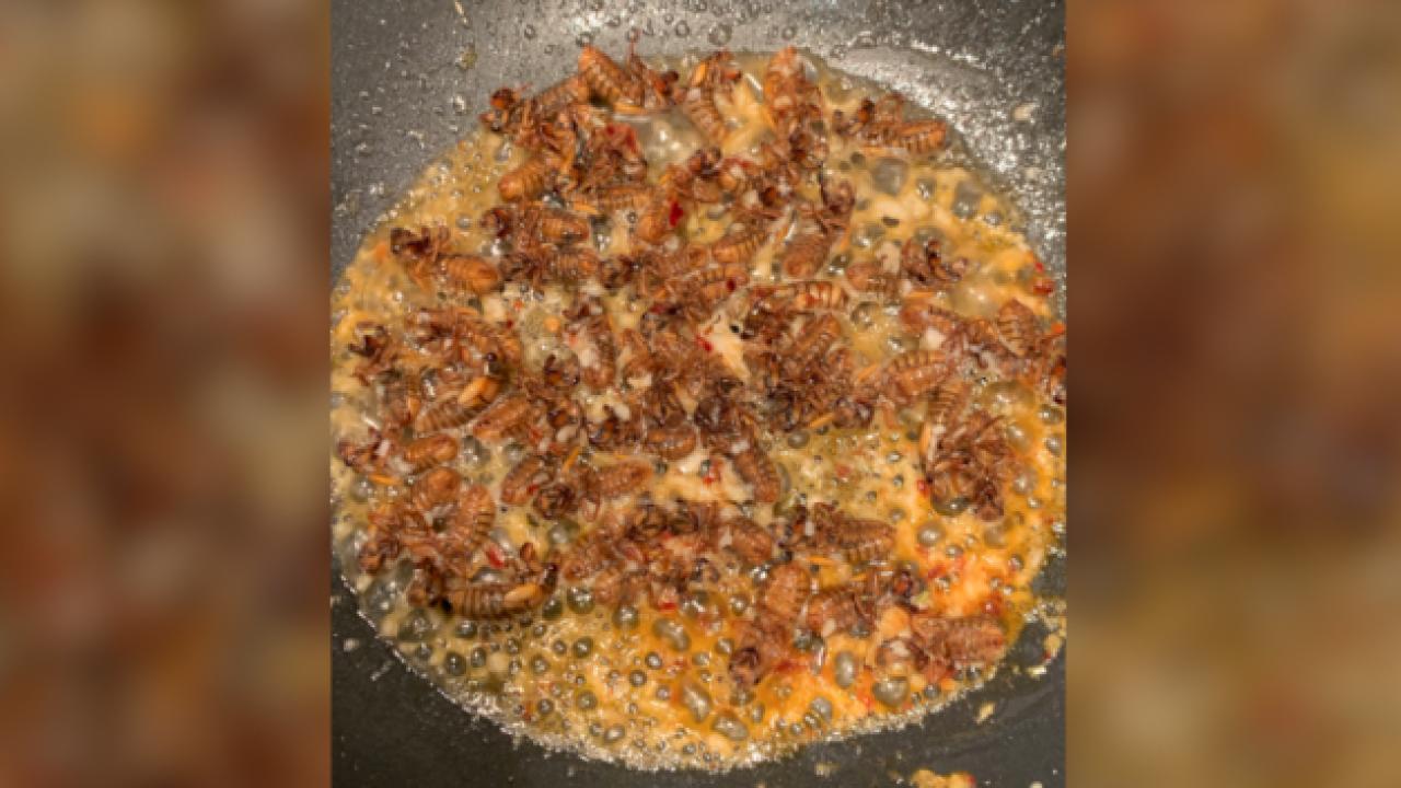 jessica fanzo cicadas2.png