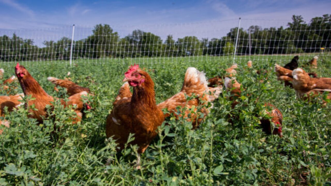 Vital Farms Shows You A Video Of The Farm Where Your Pasture-raised Eggs Came From