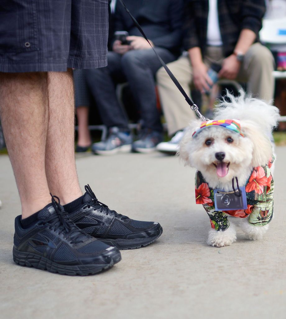 National Dress Up Your Pet Day: 16 animals who look really cute all dressed up