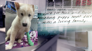 Puppy letter