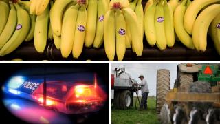 Ag Report: Bananas, Farm Crime, Diesel Tractor