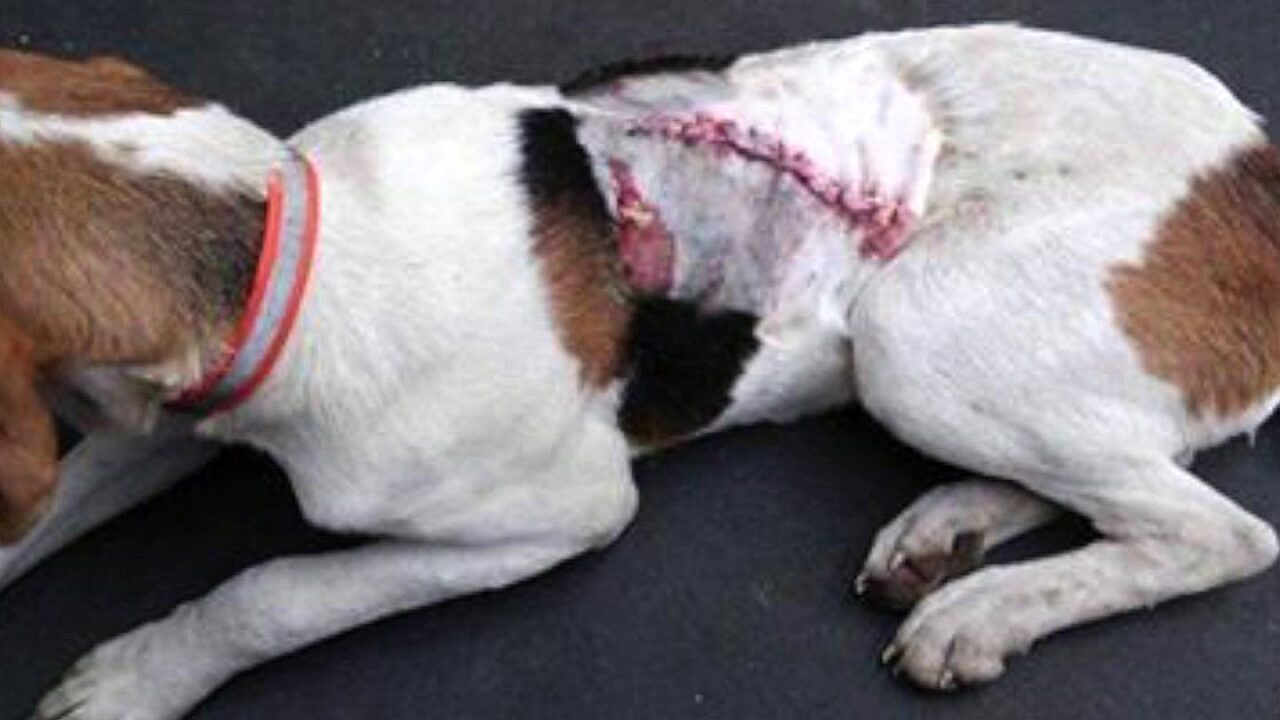 Man charged in machete attack on dog during deerhunt