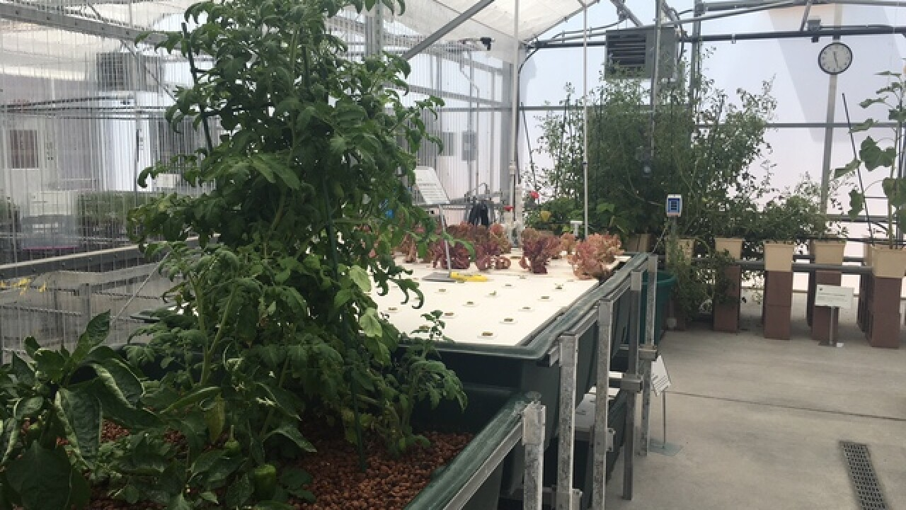 School builds greenhouse, growing for community