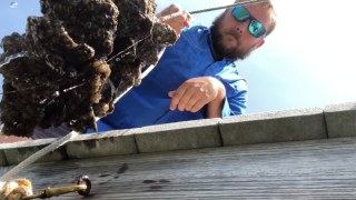 oyster reef to fight red tide