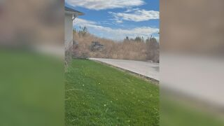 Pueblo tumbleweeds