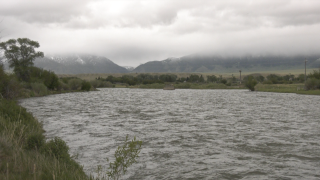 Madison River in Ennis