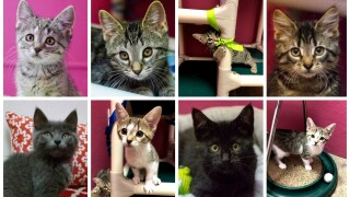 Kitten Palooza Collage.jpg