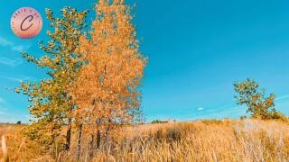 Fall in Falcon