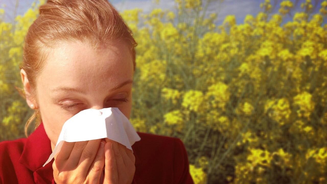file photo stock image generic graphic seasonal allergies allergy sneezing pollen.jpg