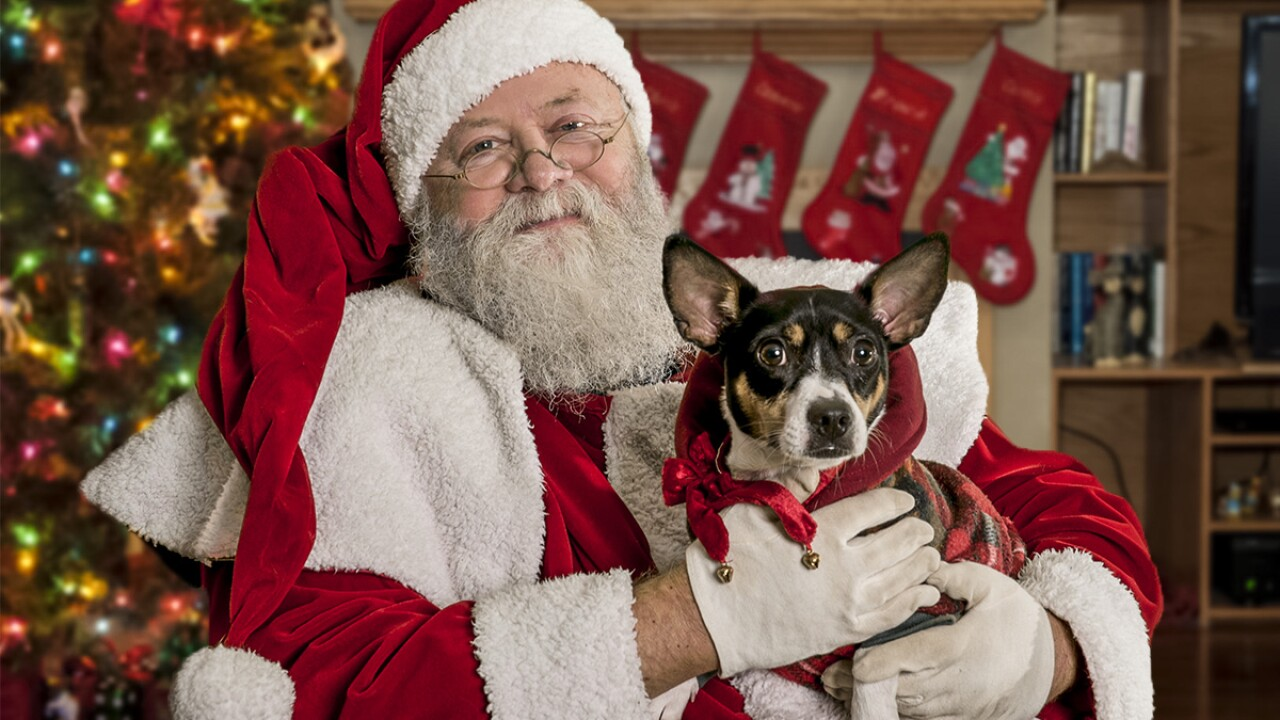Half-Off Pet Adoption Fees at CAHS Holiday Open House