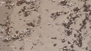 Dead fish wash ashore in parts of Florida