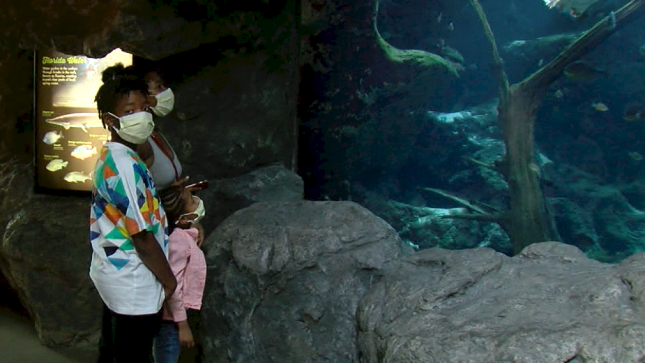 Florida Aquarium reopens with social distancing