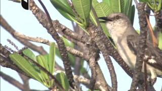Push by lawmakers to change Florida's state bird