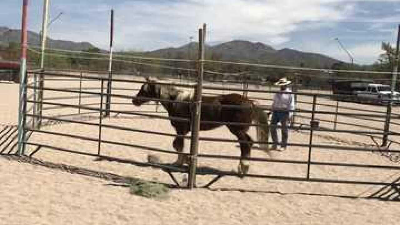 3,000 mile journey on horseback