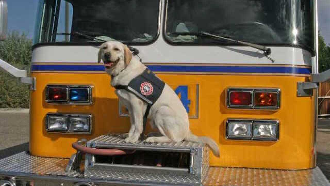 Glendale Fire Department's crisis canine Topaz passes away