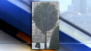 VIDEO: Possible snow flurries spotted in Palm Beach County, Treasure Coast