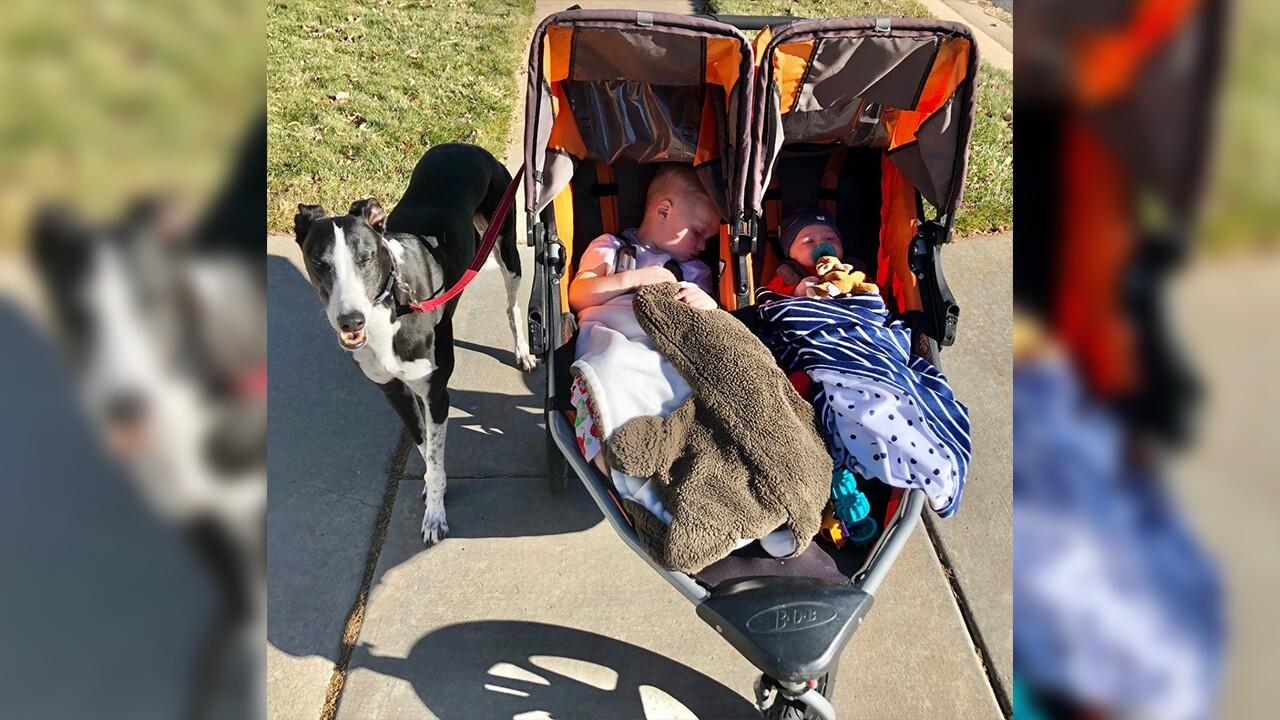 Brie babies in stroller