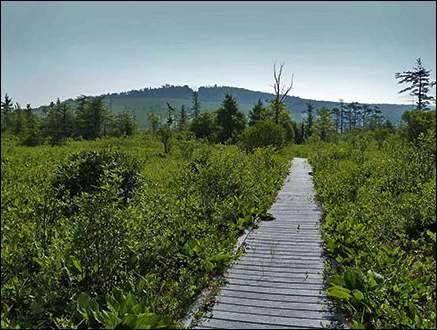 Cranesville Swamp