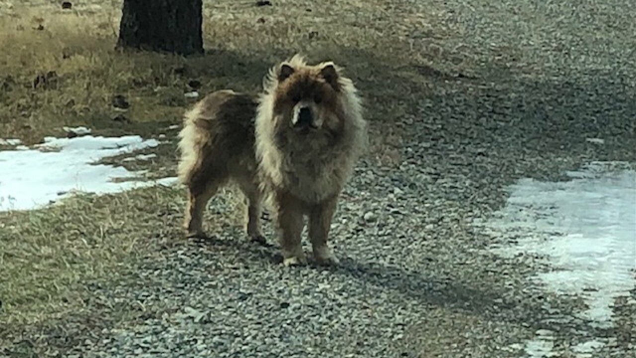 Dog lost in Montana reunited with Minnesota owners after two months