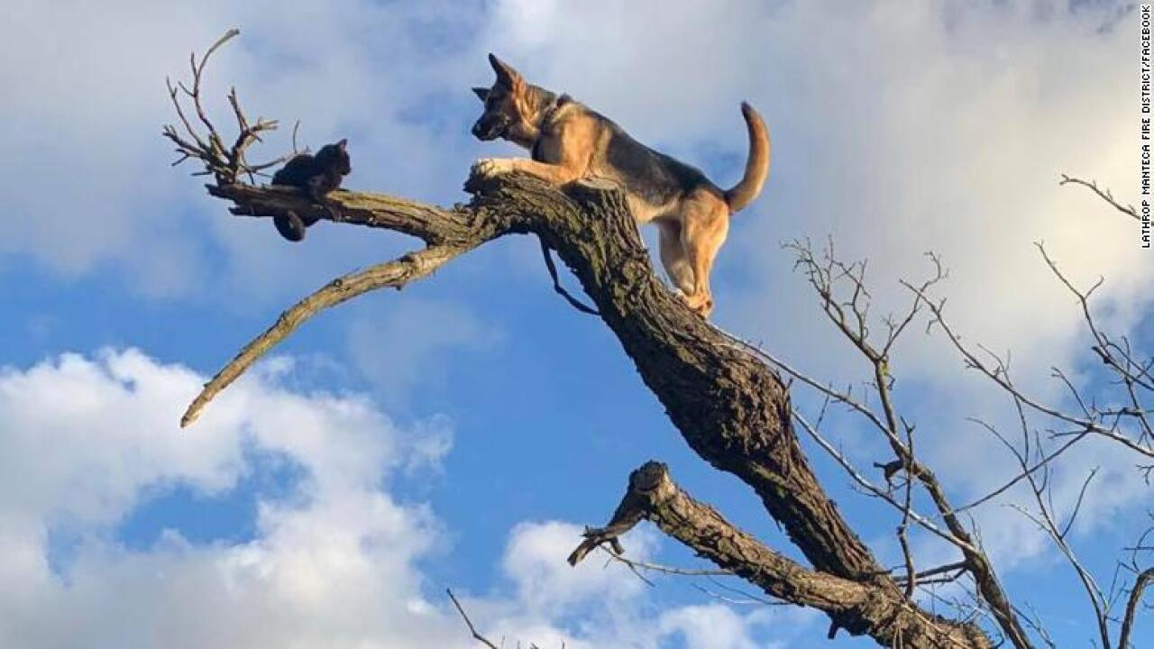 Furreal? Dog chases cat up tree and gets stuck, too