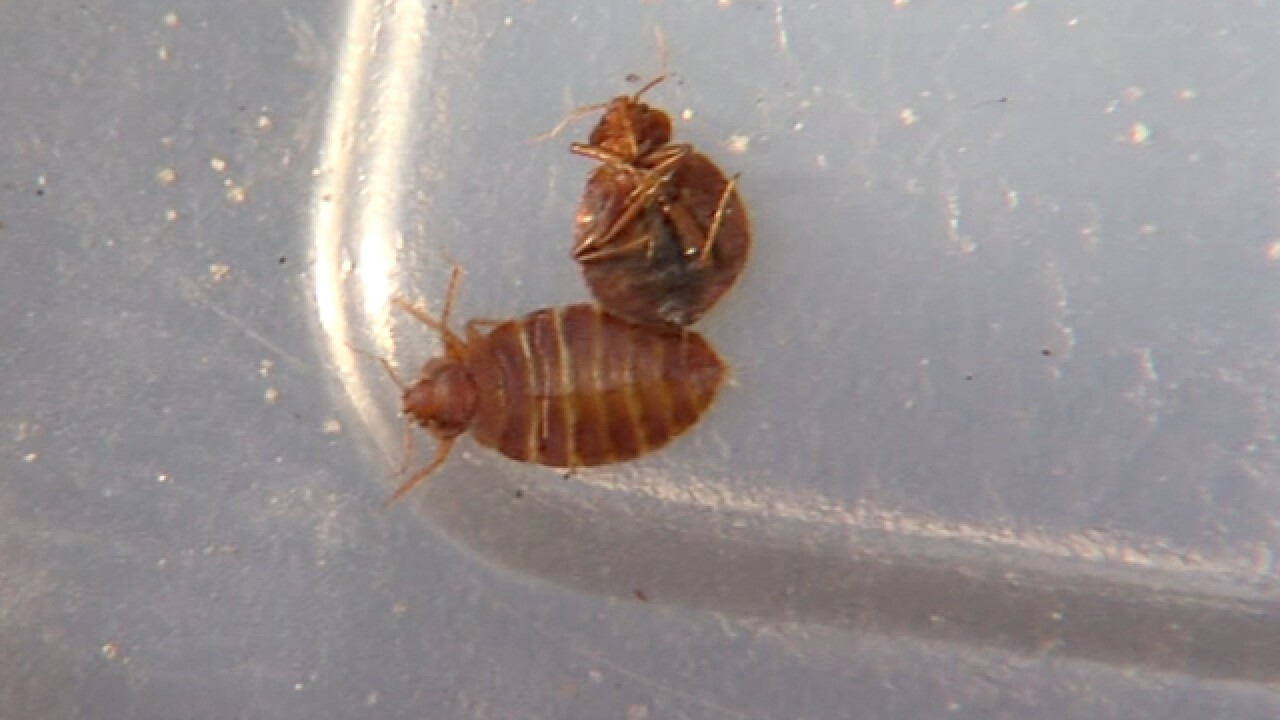 Clevend ranked in top 15 for bed bug issues