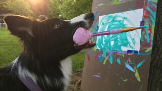 Panting painter: Chloe the border collie creates works of art for good causes this holiday season
