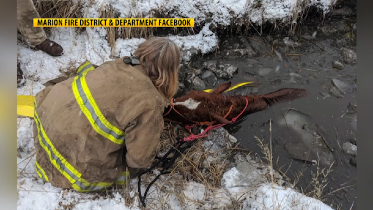 Montana animal control and firefighter save horse stranded in frozen canal in 7-hour rescue