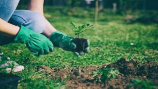 What to plant in spring: Get started now on your garden