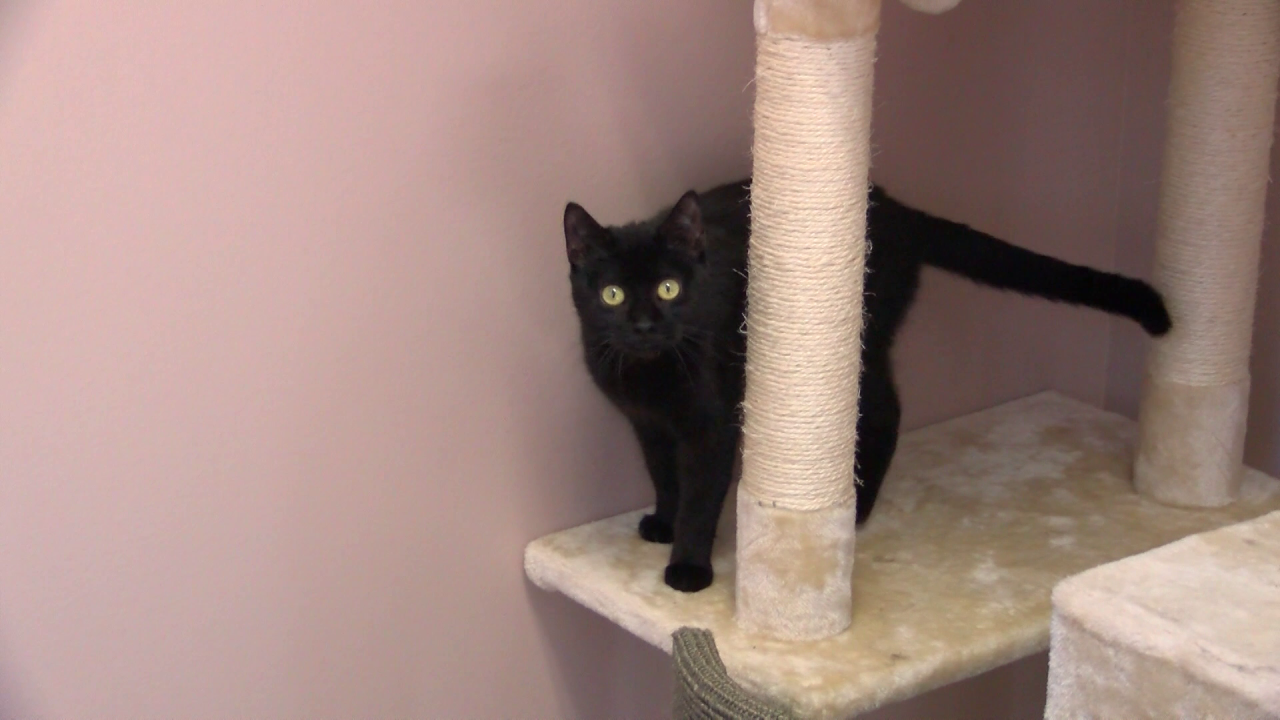 """Pets find new homes during """"Empty The Shelter"""" event"""