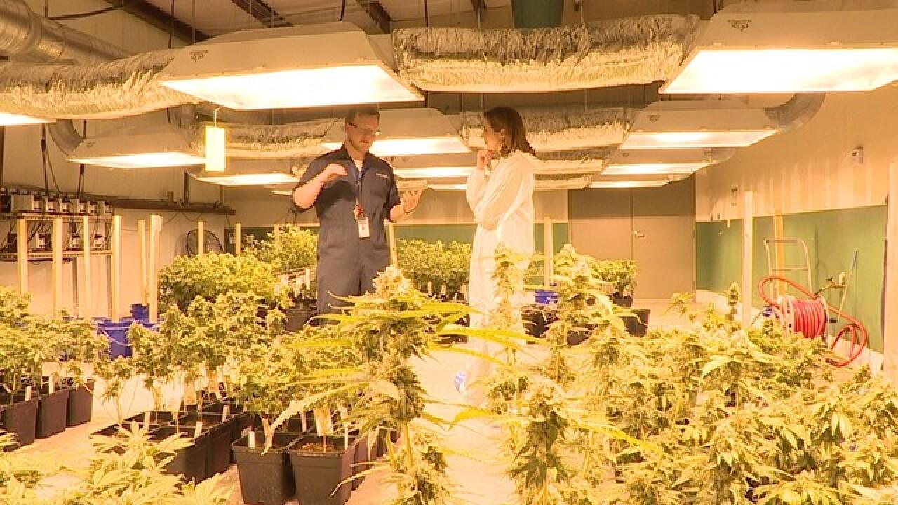Behind-the-scenes of medical marijuana in FLA