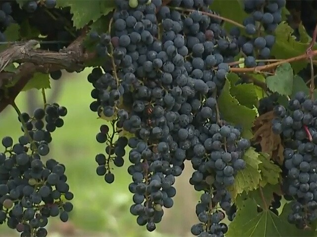 A winery is changing this Cleveland neighborhood