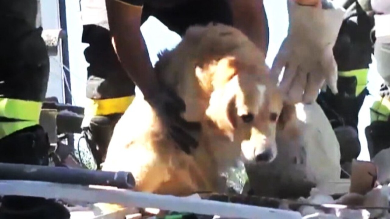 Dog 'Romeo' rescued from rubble more than a week after Italian quake