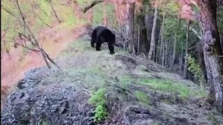 A Wilder View: Studying Montana's hibernating bears