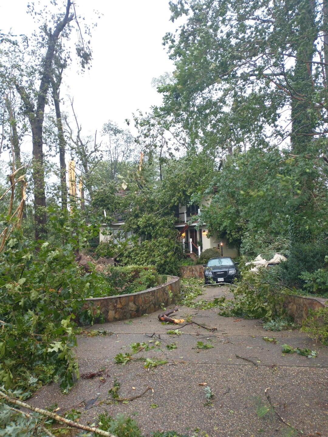 Downed trees in Suffolk 1.jpg