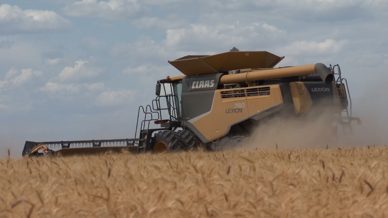 Montana Ag Network: Winter wheat harvest underway