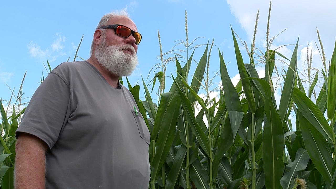 Farming hemp in Ohio