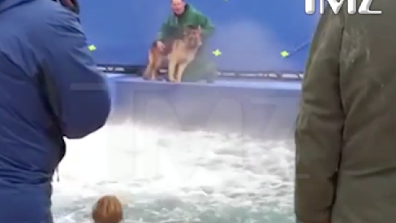 Video shows possible animal abuse on the set of 'A Dog's Purpose'
